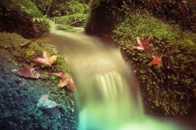 Ström och röd lönn arkivfoto
