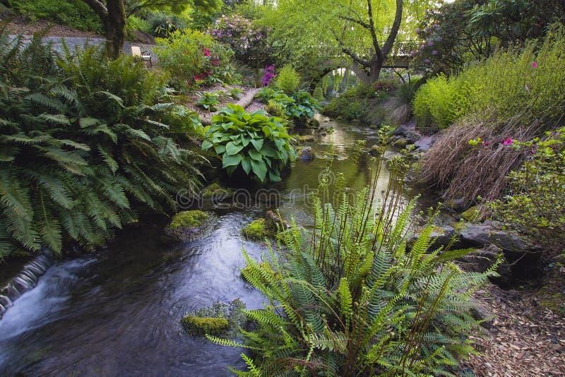 Ström på Crystal Springs Rhododendron Garden royaltyfri foto