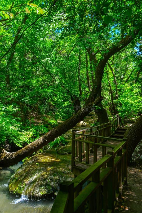 Ström som flödar till och med träd trägångbana och bro vertikalt arkivfoton