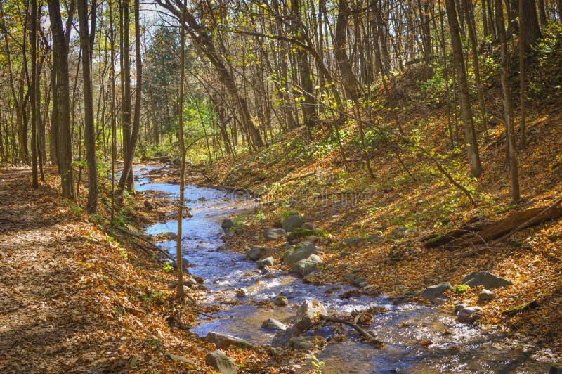 Ström som slingrar till och med skogen royaltyfri foto