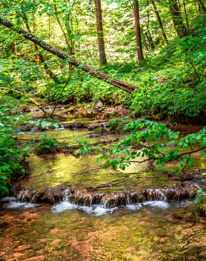 Ström till och med den soliga skogen royaltyfri fotografi