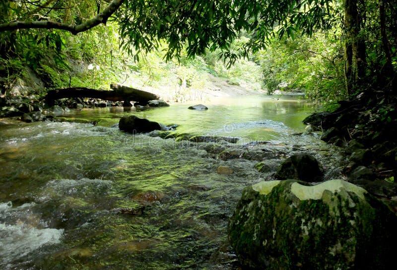 Ströme vom Wasserfall im Wald lizenzfreie stockbilder