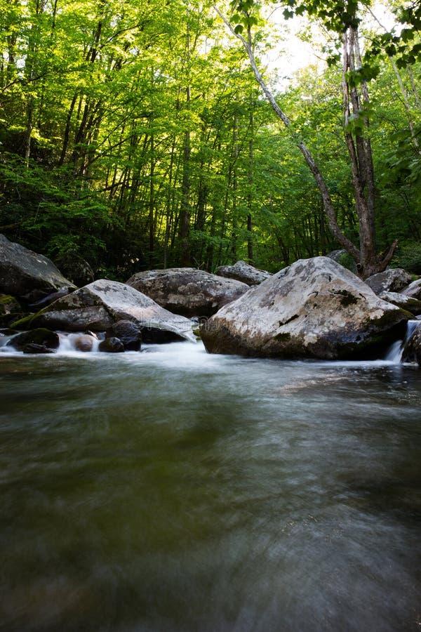 Strömen des Wassers im Wald lizenzfreies stockfoto