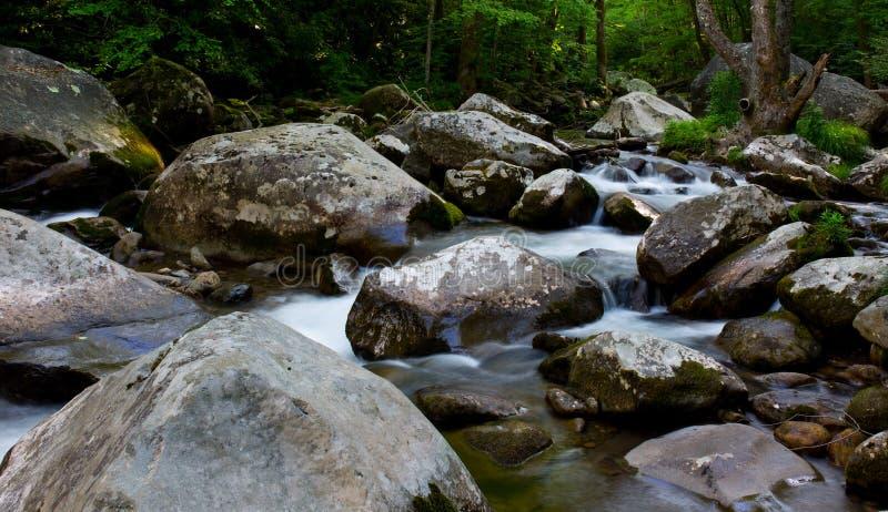 Strömen des Wassers im Wald stockbild