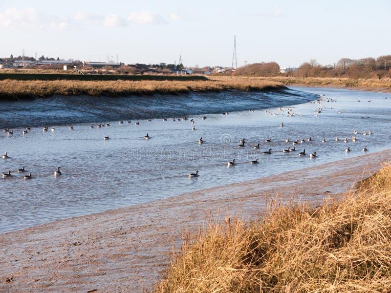 strömen Sie Essex-Mündung Küste des blauen Wassers der Flusslandschaftsansicht mit stockbilder