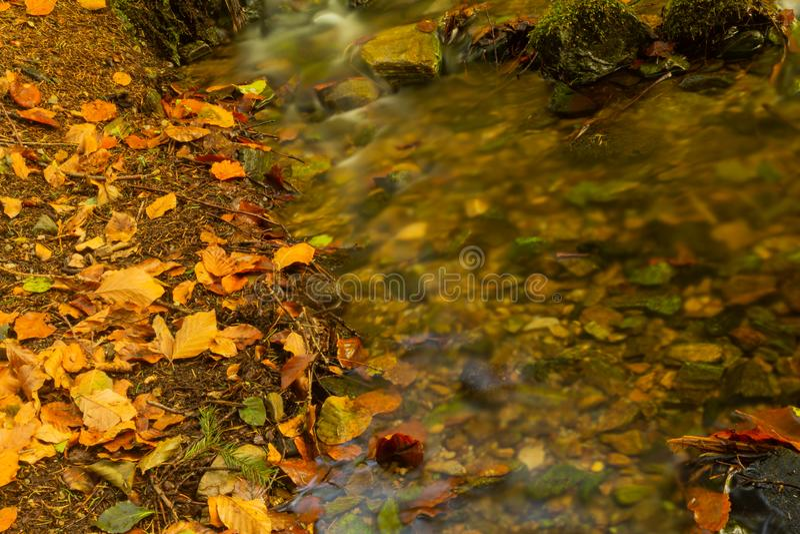 Strömen Sie hinunter einen Gebirgswald mit kleinen Wasserfällen im Vordergrund und frischem grünem Farn im Hintergrund leicht kas stockfoto