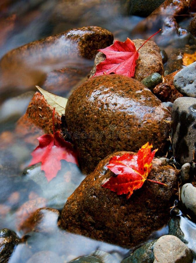 Strömen Sie mit roten Blättern stockbild