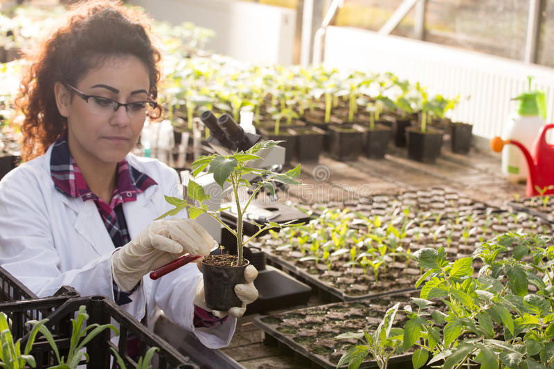 Strömende Chemikalien des Biologen im Topf mit Sprössling lizenzfreie stockbilder