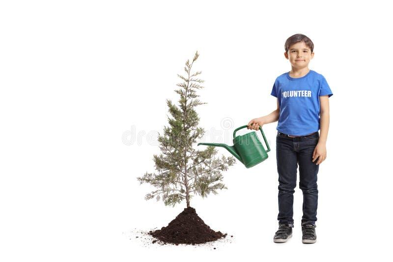Strömendes Wasser des Jungenfreiwilligen zu einem gepflanzten Baum lizenzfreie stockbilder