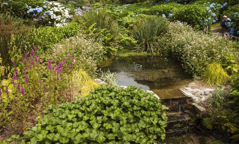 Strömma att flöda över moment på Trebah trädgårdar, Cornwall royaltyfria foton
