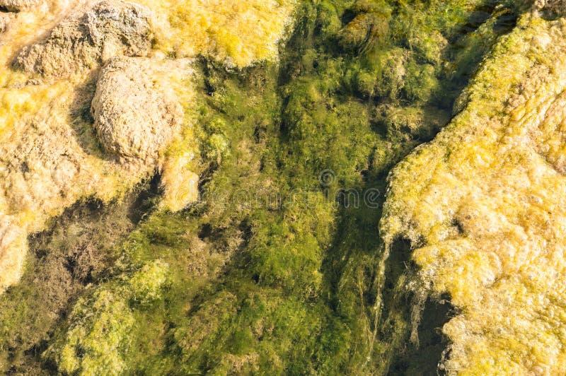 Strömma säng av en liten förorenad undegoing eutrophication för floden royaltyfri fotografi