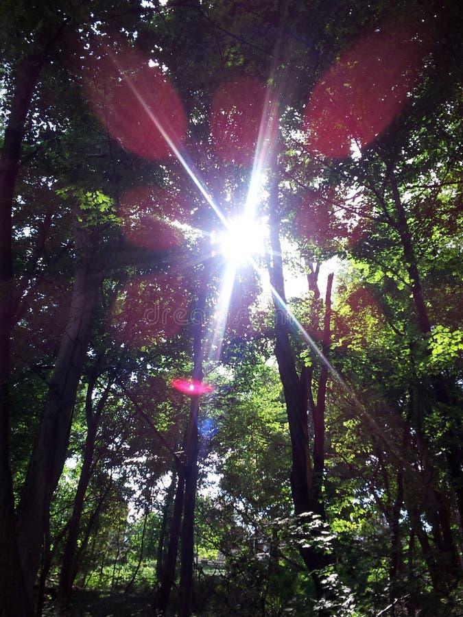 Strömmar av färgrikt solljus till och med sidorna, medan fotvandra i skogen arkivbilder