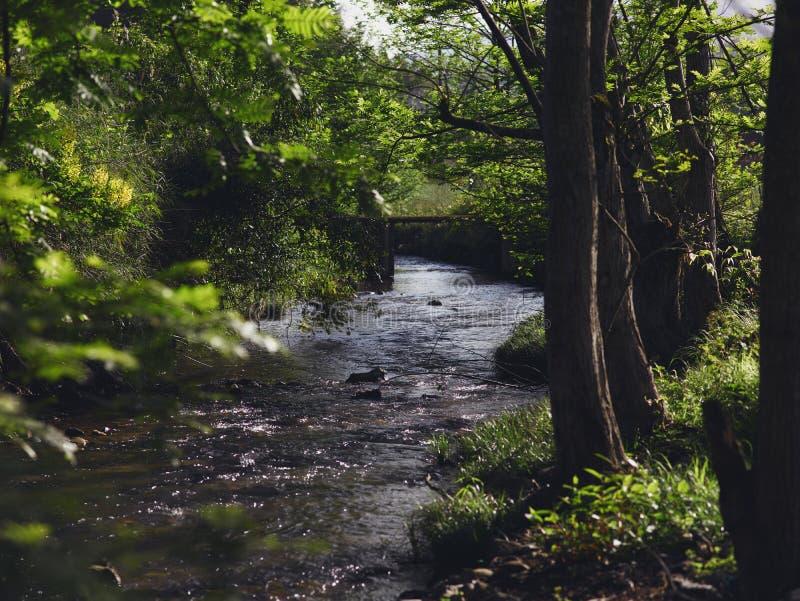 Strömmar korsar skogen, en liten stenbro över strömmen, solen till och med skogen till The Creek arkivfoton
