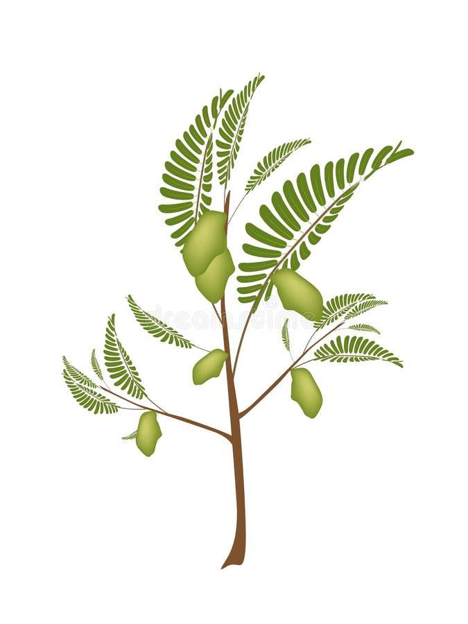 Strąk Pisklęcy grochy na roślinie ilustracji