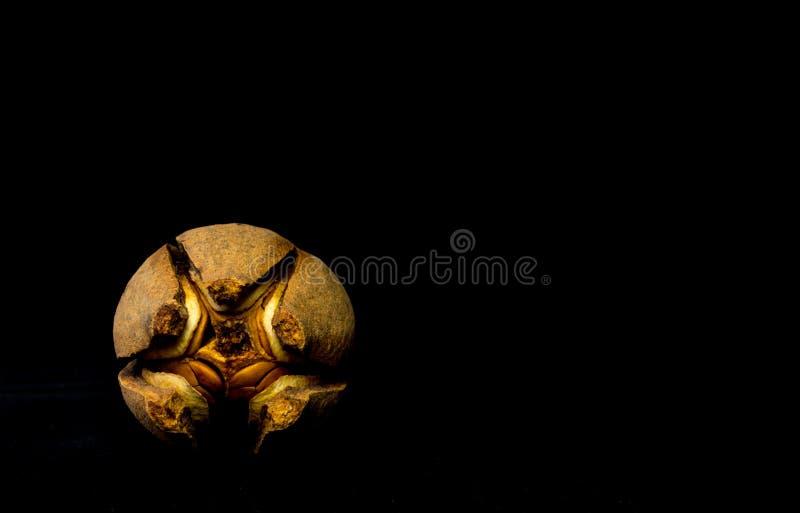 Strąki i ziarna mahoń na czarnym tle obraz stock