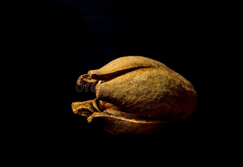 Strąki i ziarna mahoń na czarnym tle zdjęcia royalty free