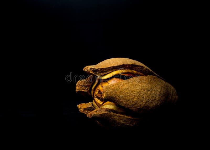 Strąki i ziarna mahoń na czarnym tle zdjęcie royalty free