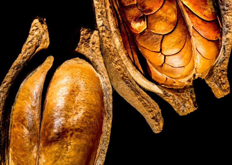 Strąki i ziarna mahoń na czarnym tle fotografia stock