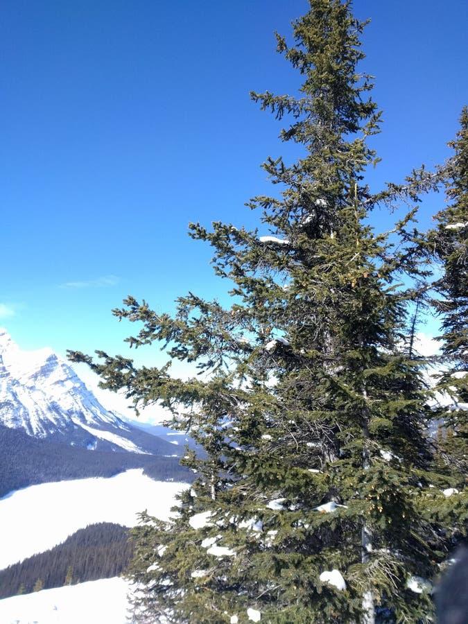 Str?va omkring runt om Banff, Alberta, Calgary i vinter royaltyfria bilder