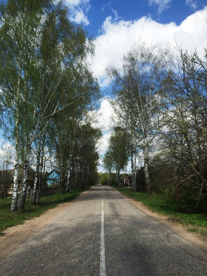 Straße in den Bäumen stockfotos