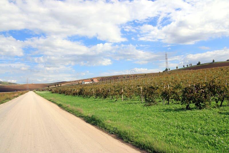 Straße in den Herbstweinbergen lizenzfreie stockbilder