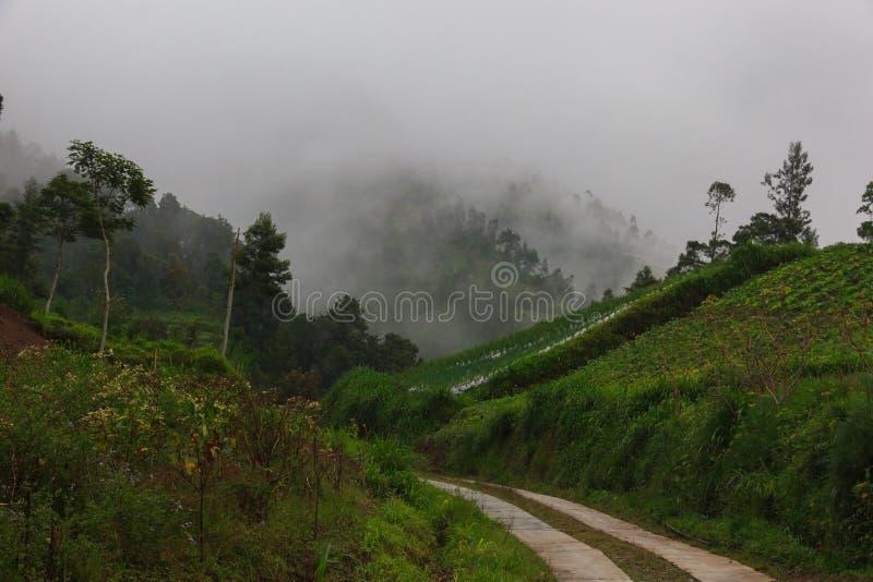 Straße in den tropischen Bergen Bahn im Gebirgsnebel und -wolken stockfoto