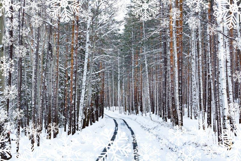 Straße in den Winterwaldsnowcovered Bäumen stockfotografie