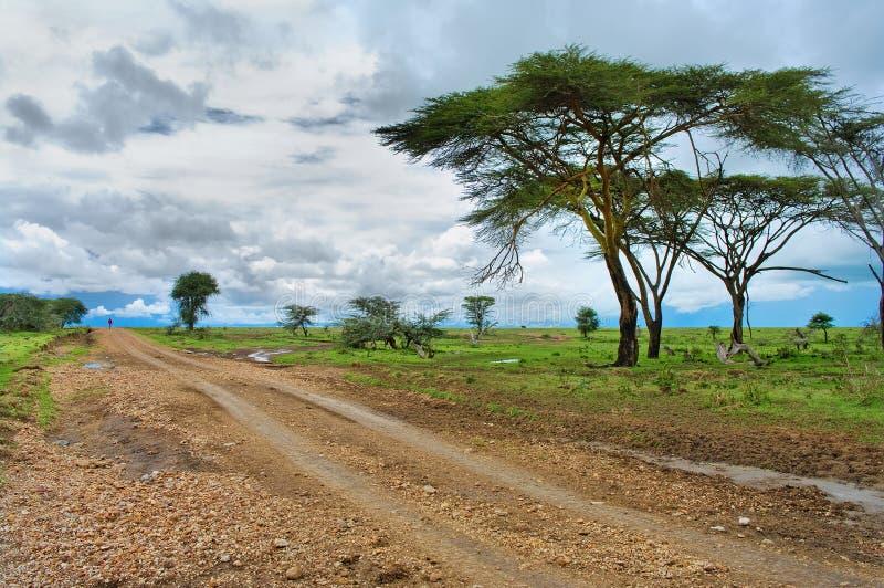 Straße in der afrikanischen Savanne lizenzfreies stockfoto