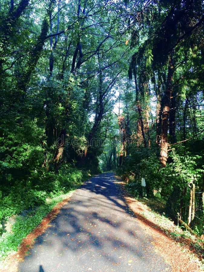 Straße, die in das Holz führt lizenzfreies stockbild