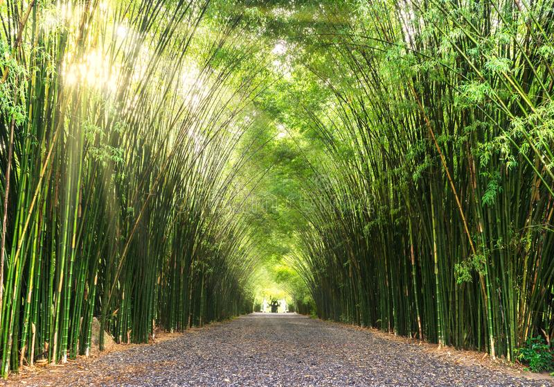 Straße durch Bambus stockbild