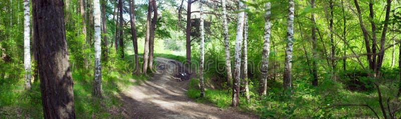 Straße durch Birkenwald -- Sommerlandschaft, Panorama lizenzfreie stockfotografie