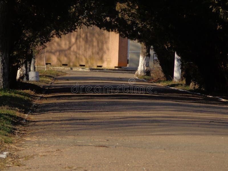 Straße durch den Park stockbilder