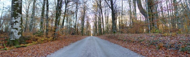 Straße durch den schwedischen Wald (HDR) lizenzfreies stockbild