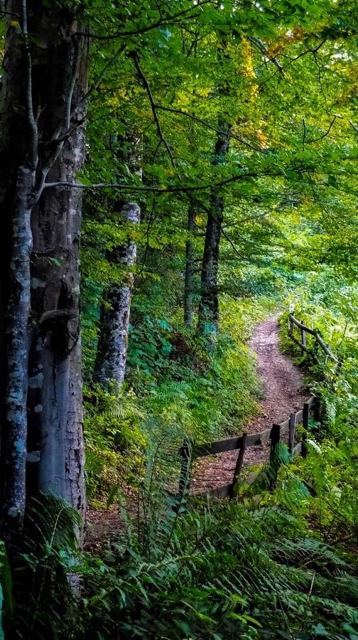 Straße durch den Wald stockfoto