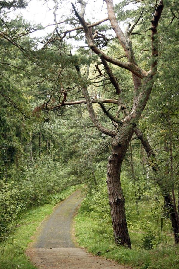 Straße durch den Wald stockbilder