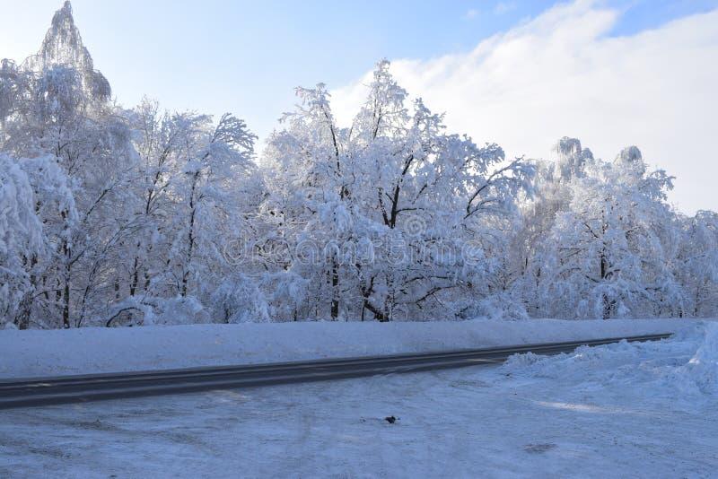 Straße durch den Wald des verschneiten Winters lizenzfreies stockbild