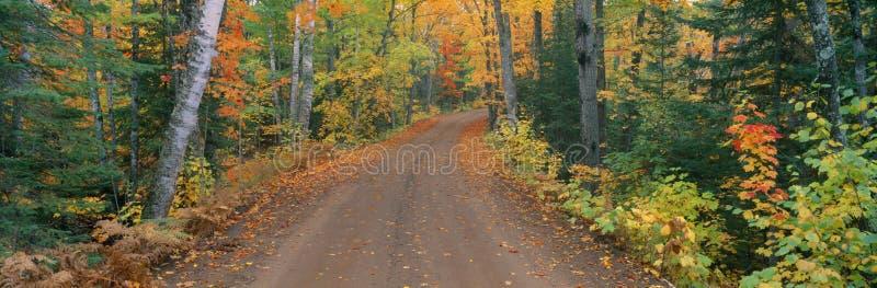Straße durch die Bäume stockfoto