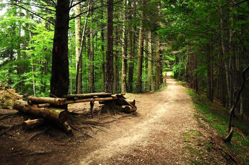 Straße durch einen furchtsamen Wald am Sommer stockfoto