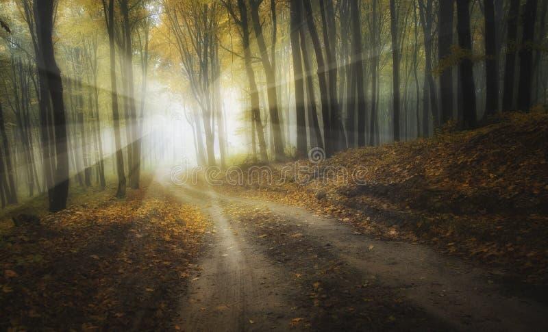 Straße durch einen nebelhaften Wald mit schönen Farben im Herbst und in den Strahlen lizenzfreie stockbilder