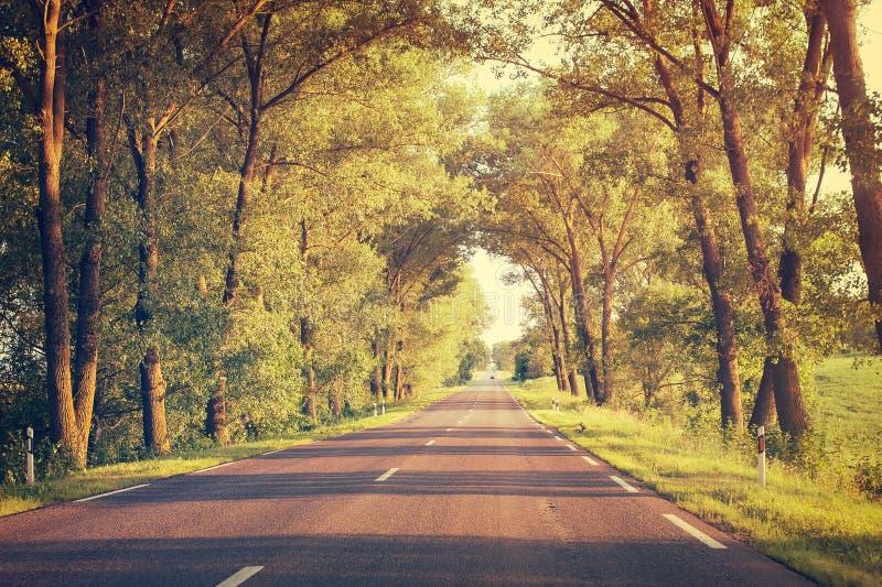 Straße durch Wald lizenzfreies stockbild