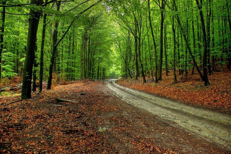 Straße durch Wald lizenzfreies stockfoto