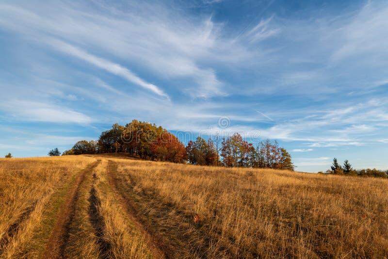 Straße durch Wald im Herbst stockfotografie