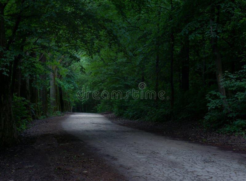 Straße in einem mystischen Wald lizenzfreie stockfotografie
