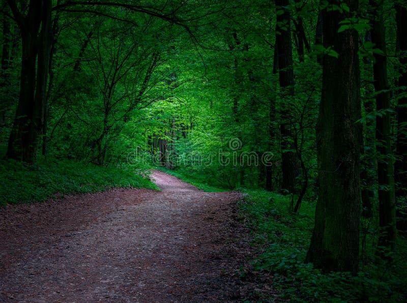 Straße in einem mystischen Wald lizenzfreies stockbild