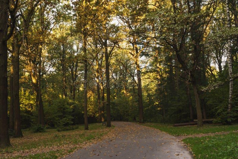 Straße in einem schattigen Herbstpark lizenzfreie stockbilder
