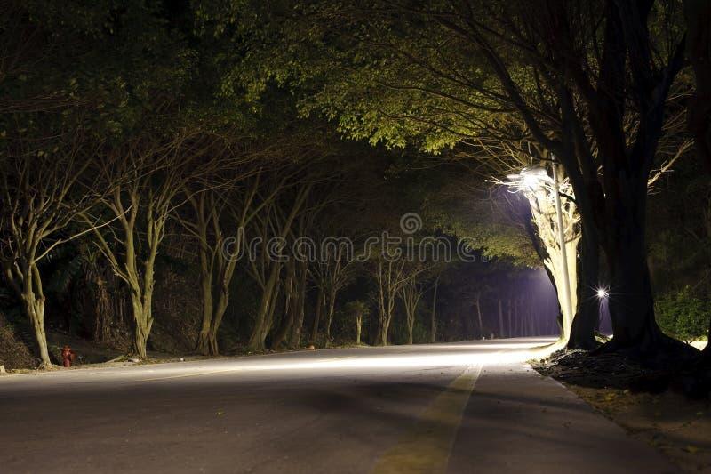 Straße im dunklen Wald stockbilder