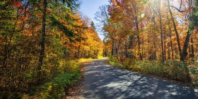 Straße im Fallwald lizenzfreie stockfotos