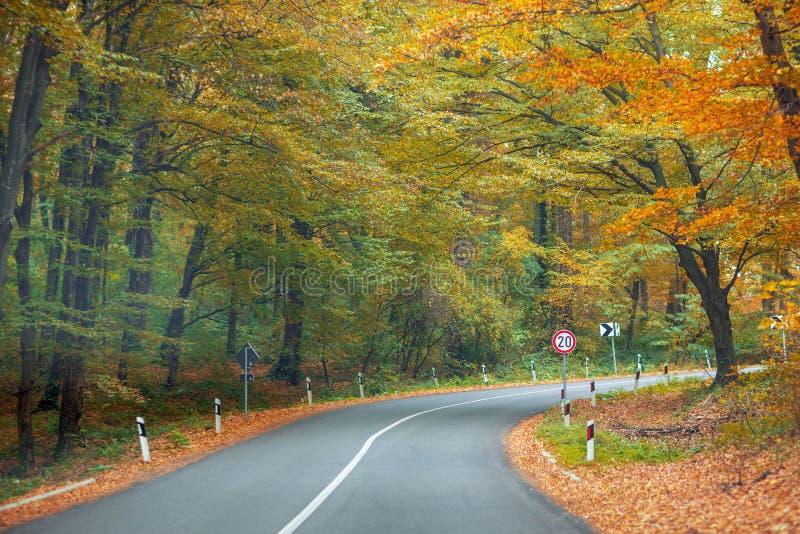 Straße im herbstlichen Wald stockfotos