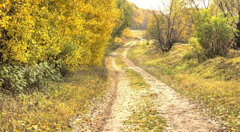 Straße im Herbstwald. HDR lizenzfreie stockfotografie