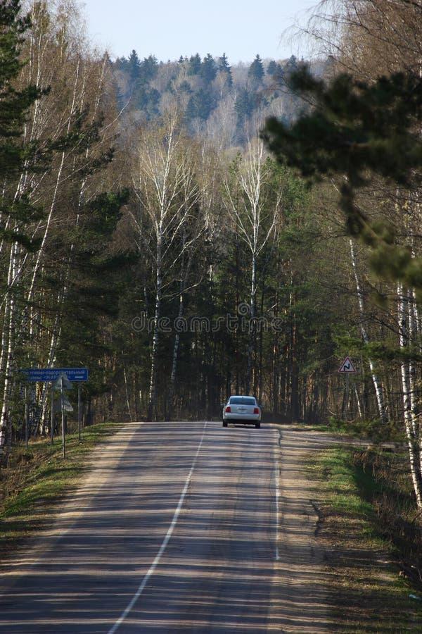 Straße im Holz lizenzfreie stockfotografie